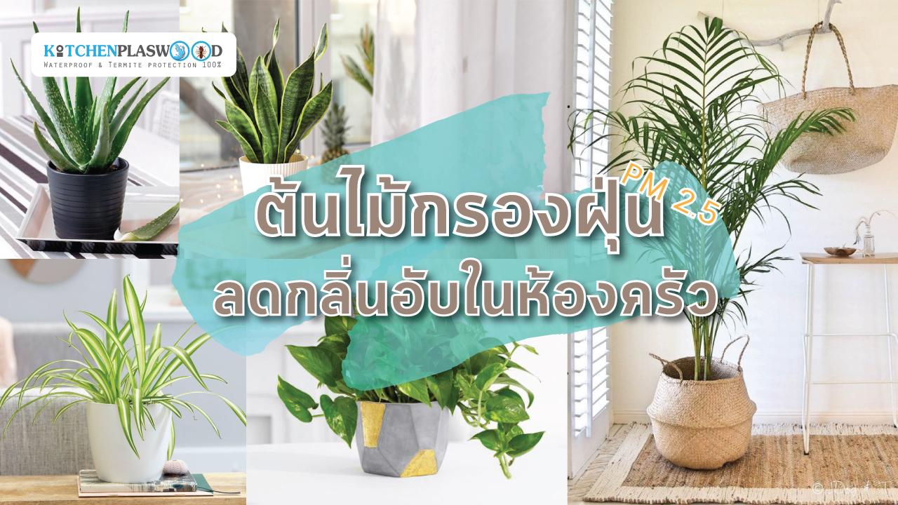ต้นไม้กรองฝุ่น PM 2.5 ลดกลิ่นอับในห้องครัว